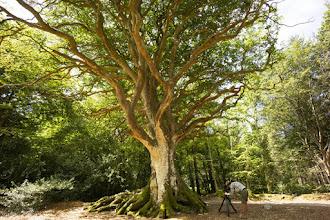 Cinéma : Les arbres remarquables, un patrimoine à protéger - Un documentaire de Georges Feterman, Jean-Pierre Duval, Caroline Breton