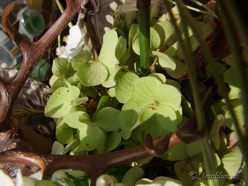Grüne Hortensien trocknen