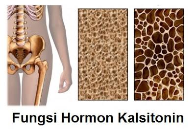 Apa Fungsi Hormon Kalsitonin ?