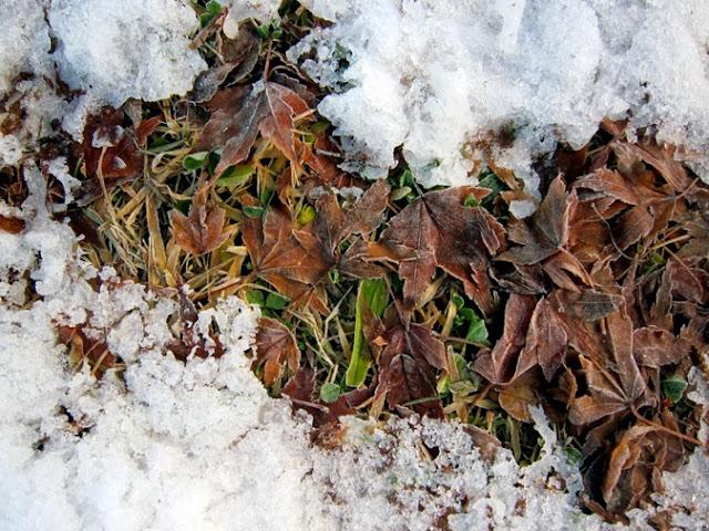 枯葉と緑の草
