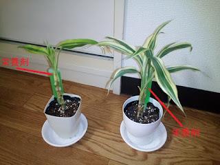 植物の写真2