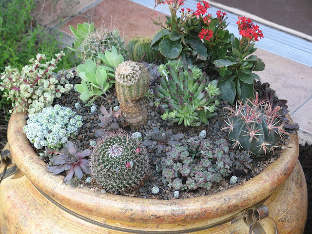 Cold Hardy Container garden