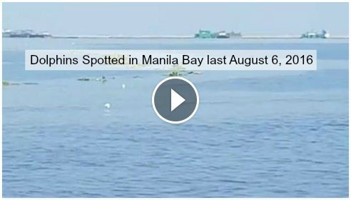 Video of Dolphins Spotted in Manila Bay last August 6 2016