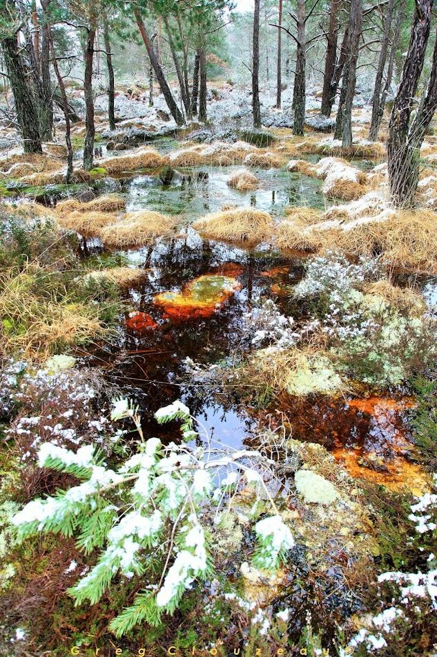 Mare du Bouledogue, Forêt de Fontainebleau, hiver 2018
