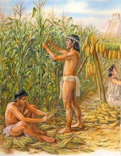 Cultivo de Maìz