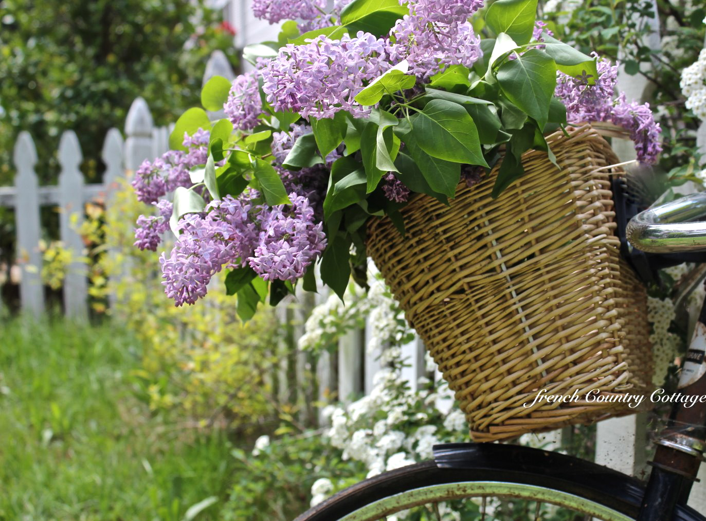 Falling Weed Wallpaper A Bouquet Of Lilacs French Country Cottage