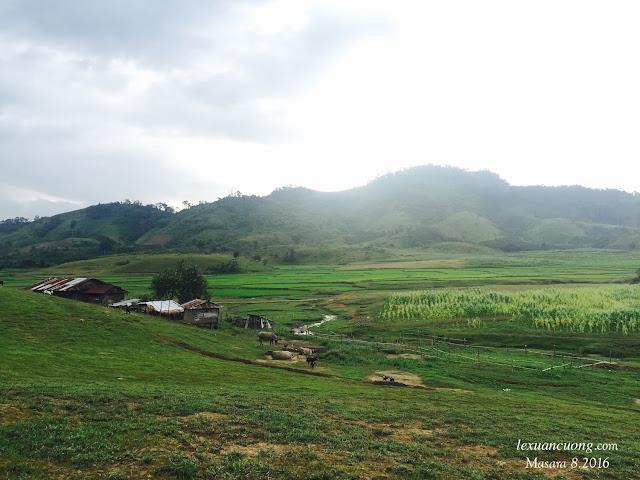 Ngôi nhà nhỏ với phía trước là ruộng lúa, phía sau là đồi thông yên bình.