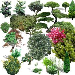 TREE PSD 02.psd (Bonsai. cây cắt xén, cây tạo cảnh)