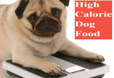 High Calorie Dog Foods , You Should  know !