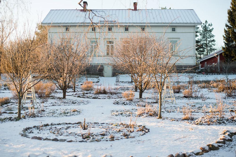 Talvinen puutarha ja potager aamuauringon valossa