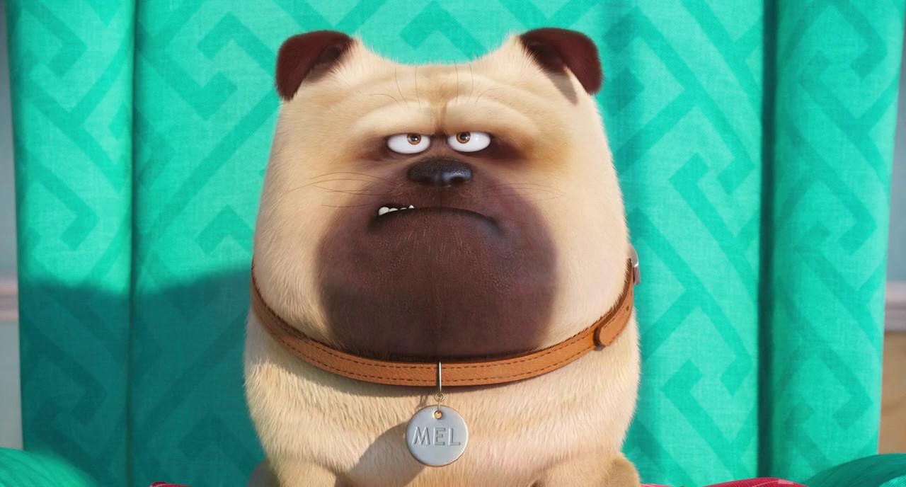 The Secret Life Of Pets 2016 Hindi Download