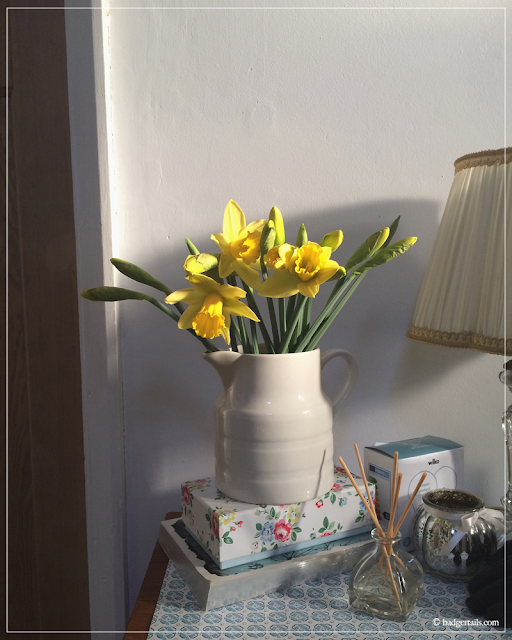 Daffodils-in-Milk-Jug-Beginning-to-Flower-in-Hallway-Spring-Home