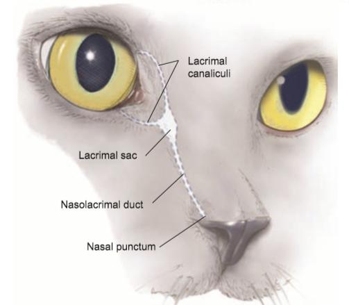 Eye Opener: Anatomy - Glands