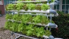 Peluang Sukses Usaha Rumahan Ala Tanaman Hidroponik - Tips Bisnis