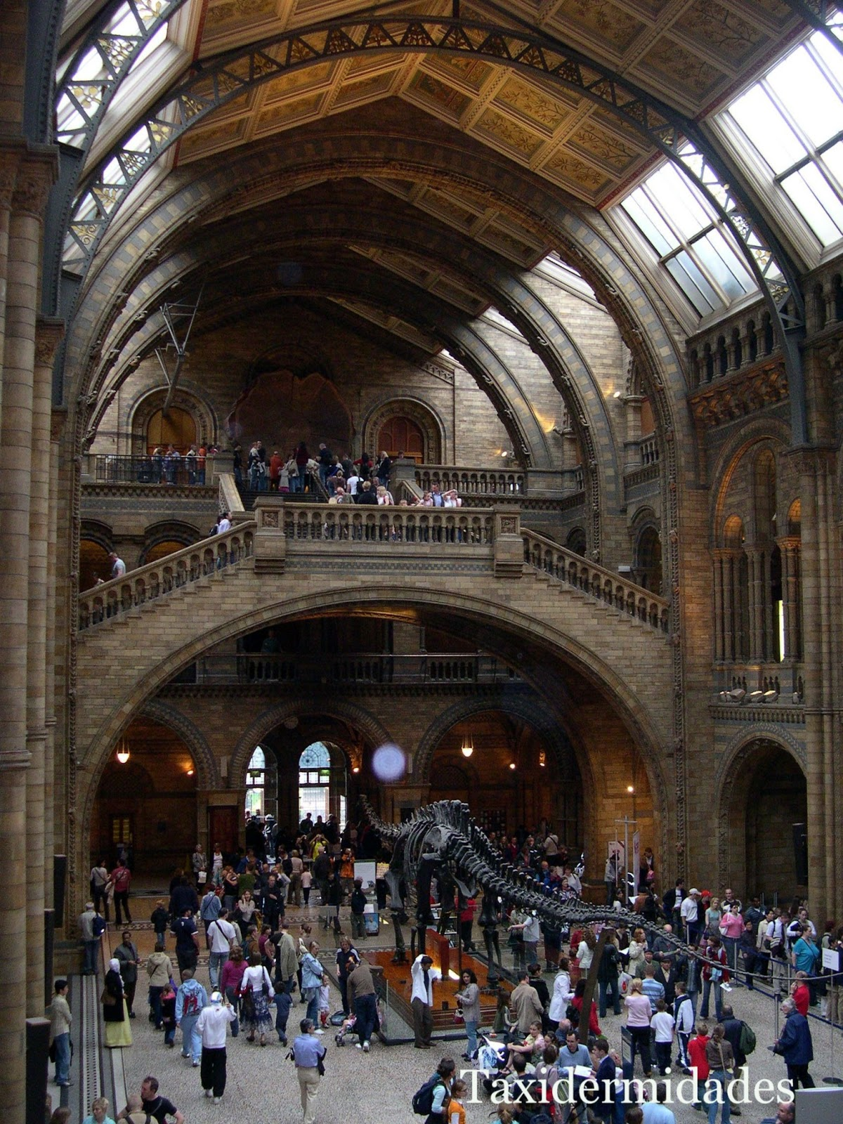 El Museo de Historia Natural de Londres. | Taxidermidades