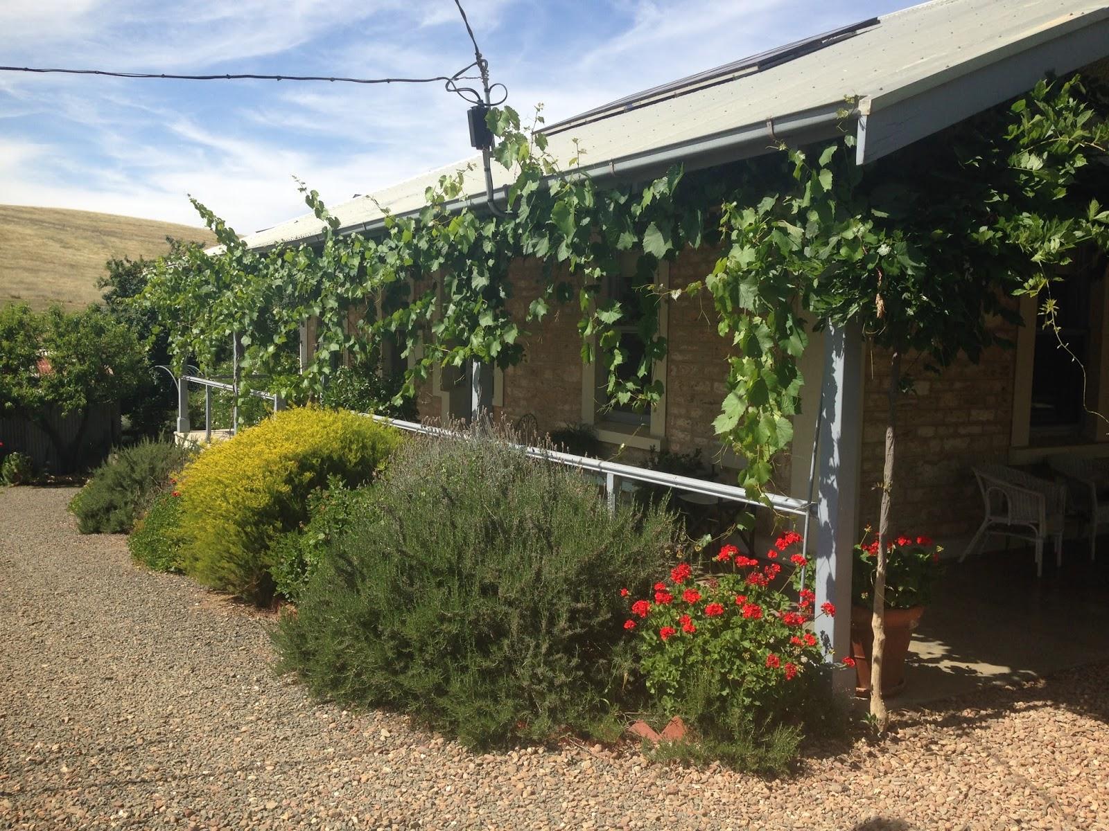 Jembella farm sunny winter days and poppies for Winter garden maintenance