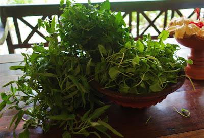 sri lankan herbs, green leaves sri lanka, gotukola, kankun, leafy vegetables,local leaves sri lanka,