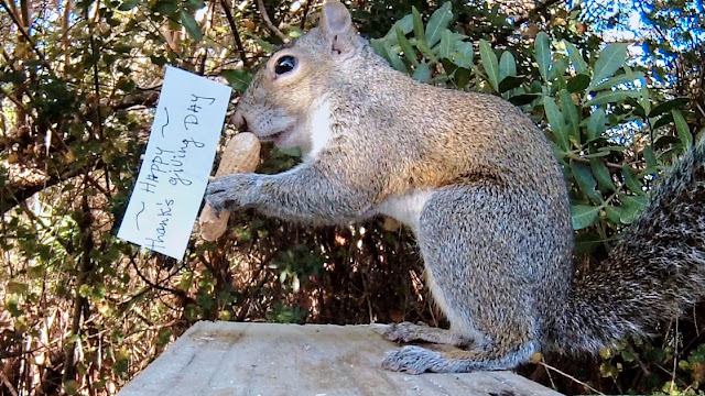 Squirrels Trash Thanksgiving Dinner Party