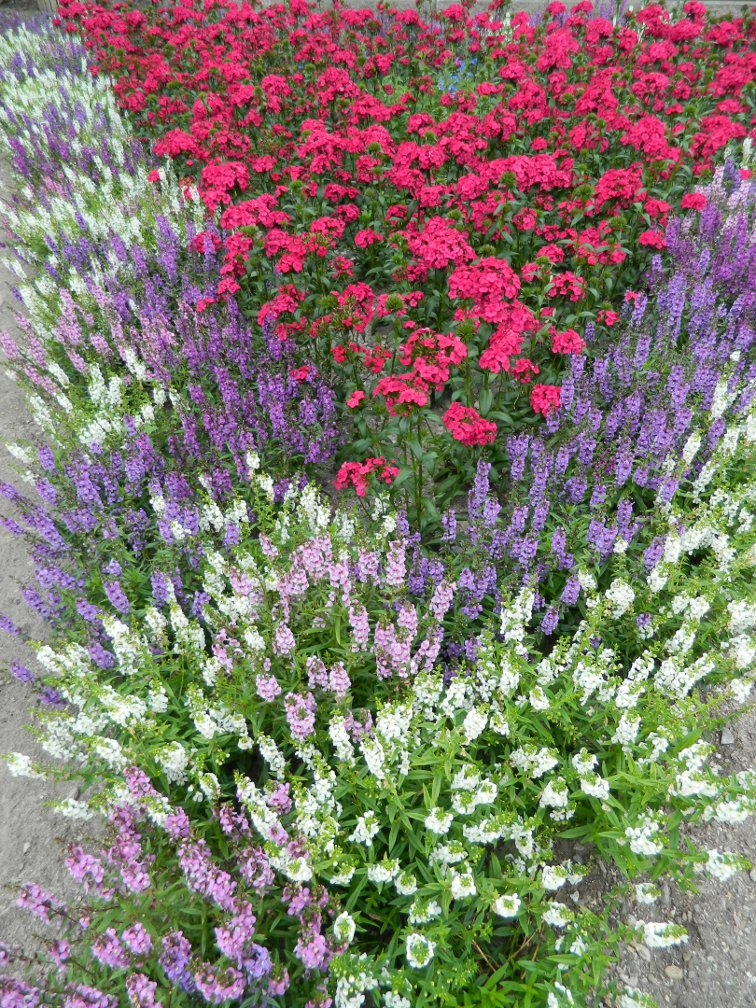 James Gardens annuals late summer by garden muses- a Toronto gardening blog