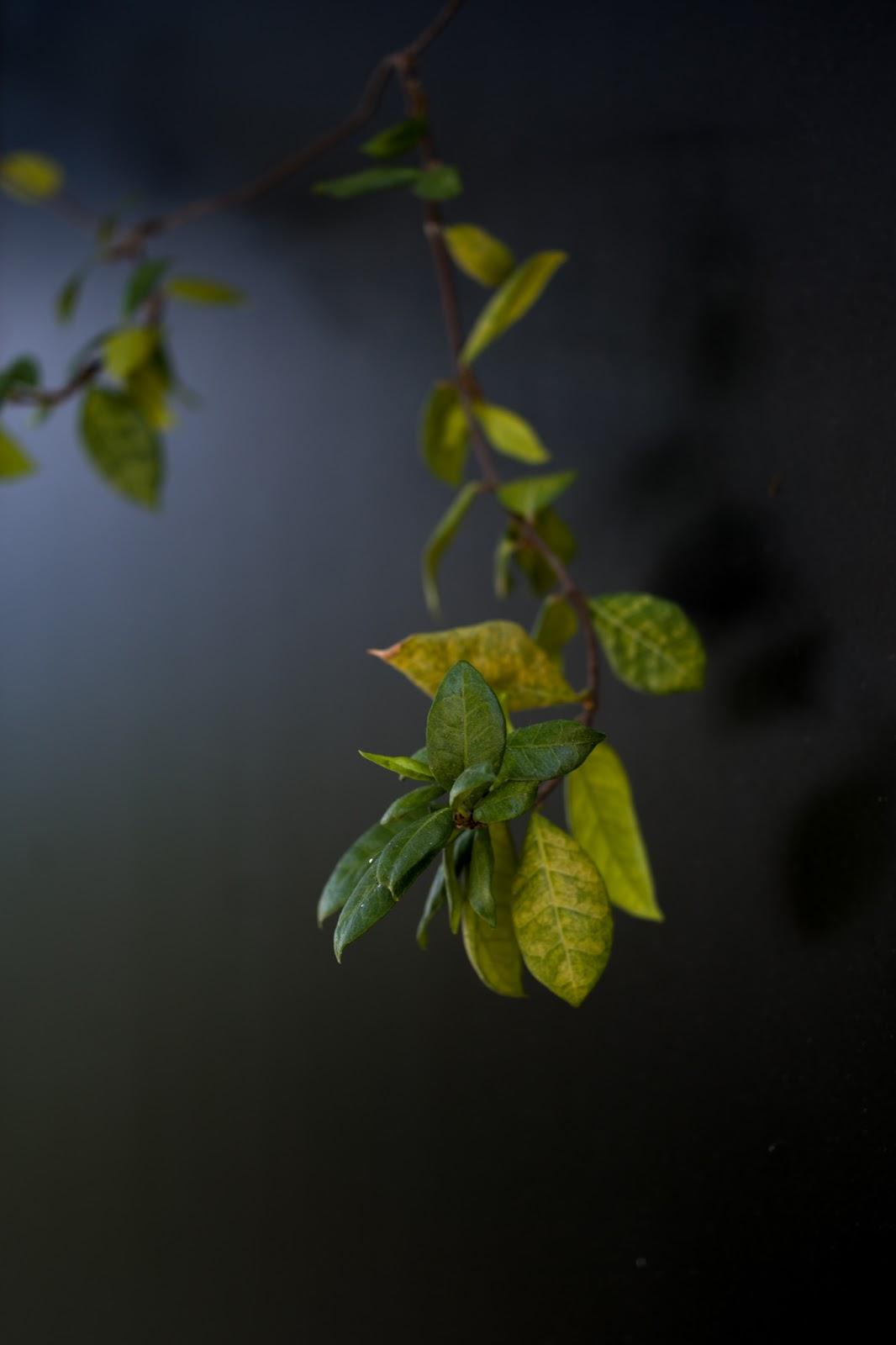 Листья - Leica TL2