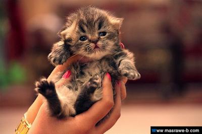 صور صور قطط كيوت 2020 خلفيات قطط جميلة جدا cats17.png