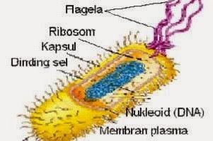 Contoh Makalah Biologi / Karya Ilmiah Biologi : Materi Biologi