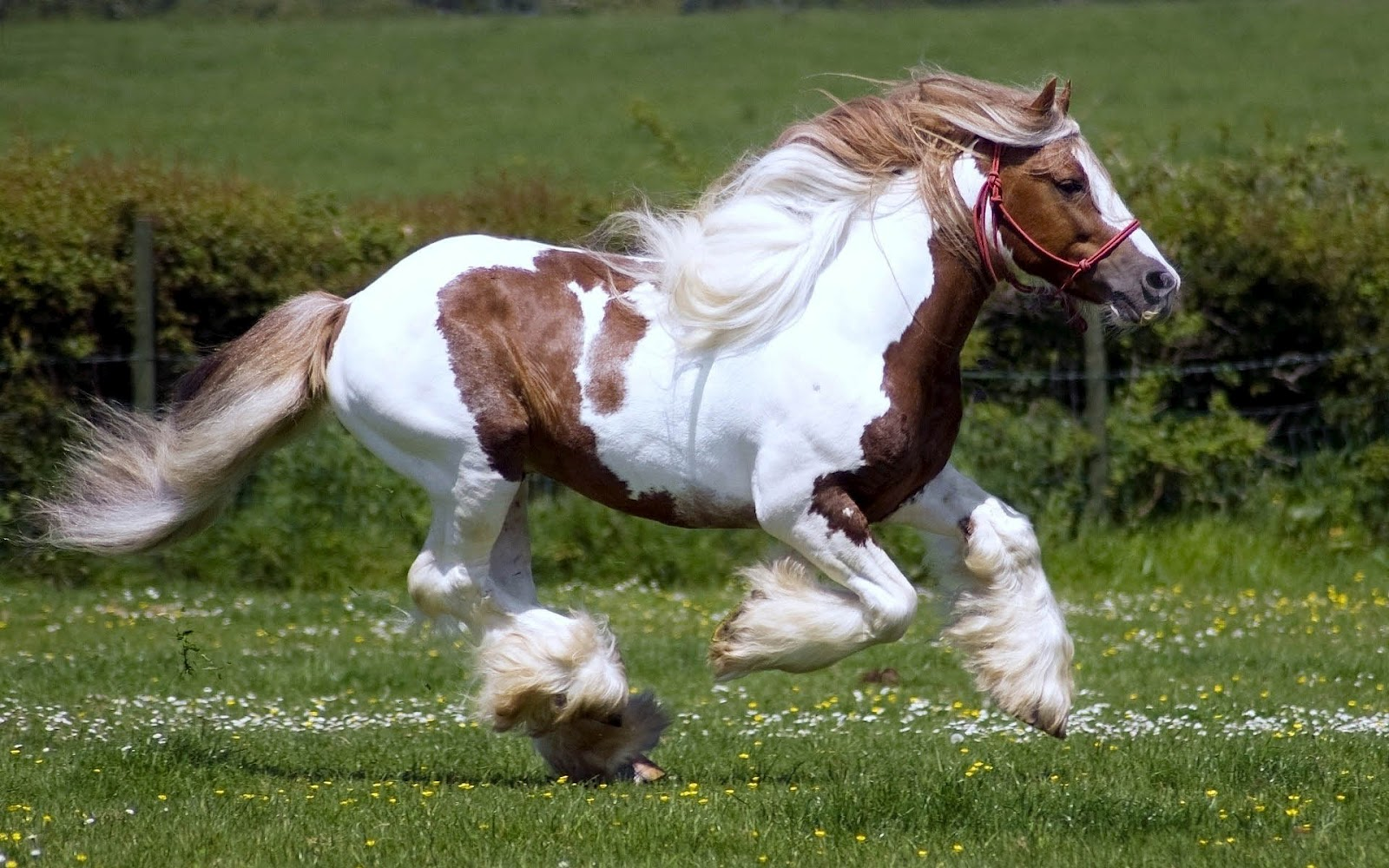 The Wallpapers: HD Horses