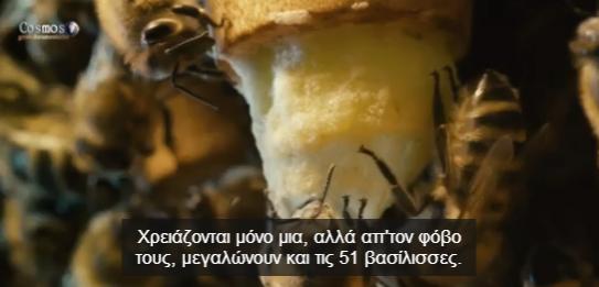 Μελισσοκομικό Ντοκιμαντέρ με Ελληνικούς Υπότιτλους