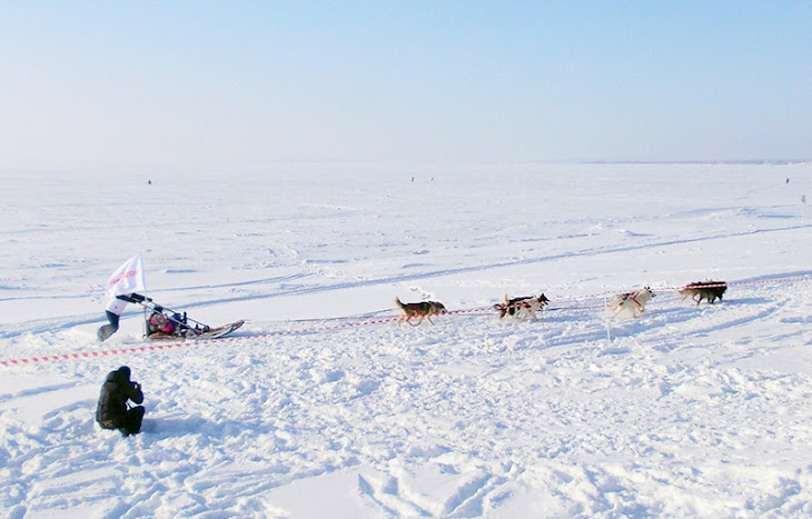 The Trip to Hotel on the Sled-dog in Norway