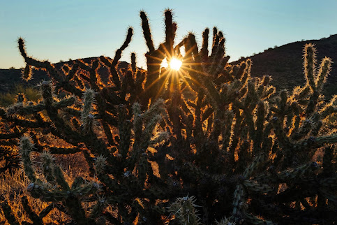Sun coming through the branches of a spiny cactus plant. Photo by Billy Cox on Unsplash.