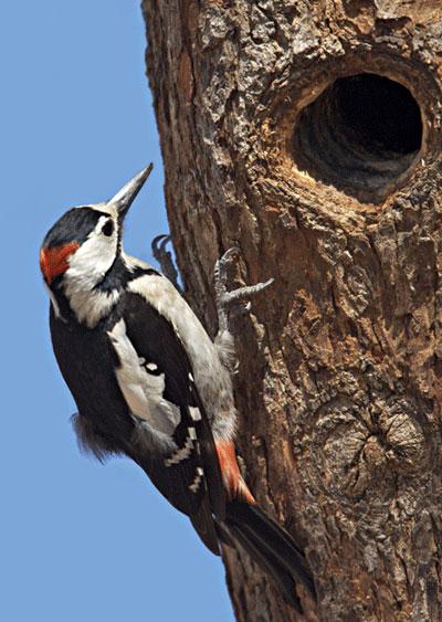 GAMBAR BURUNG  kampung burung