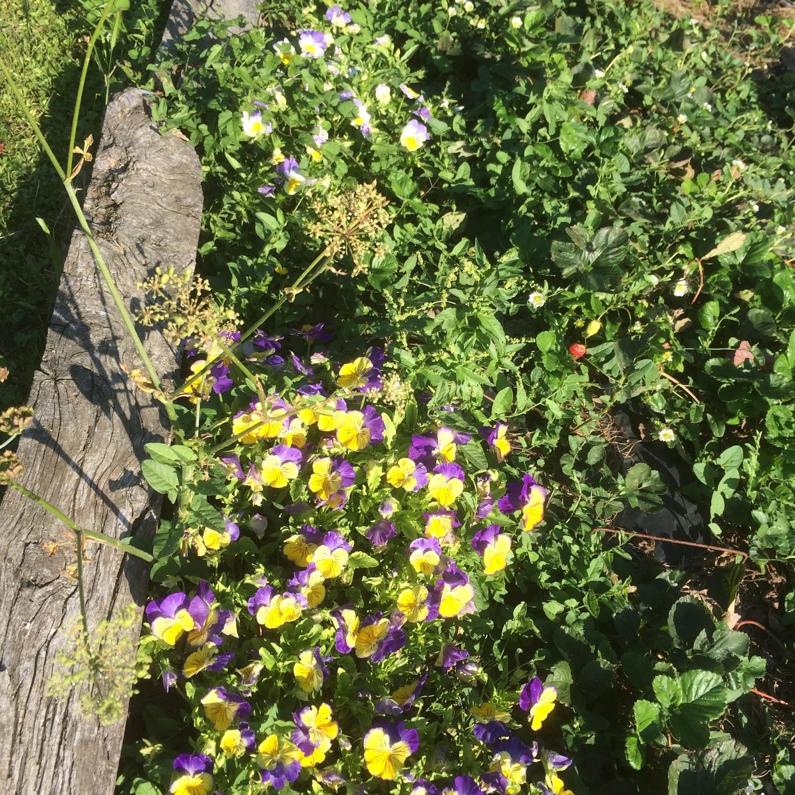 Vincent cuisinier de campagne en touraine une certaine for Jardin lamartine
