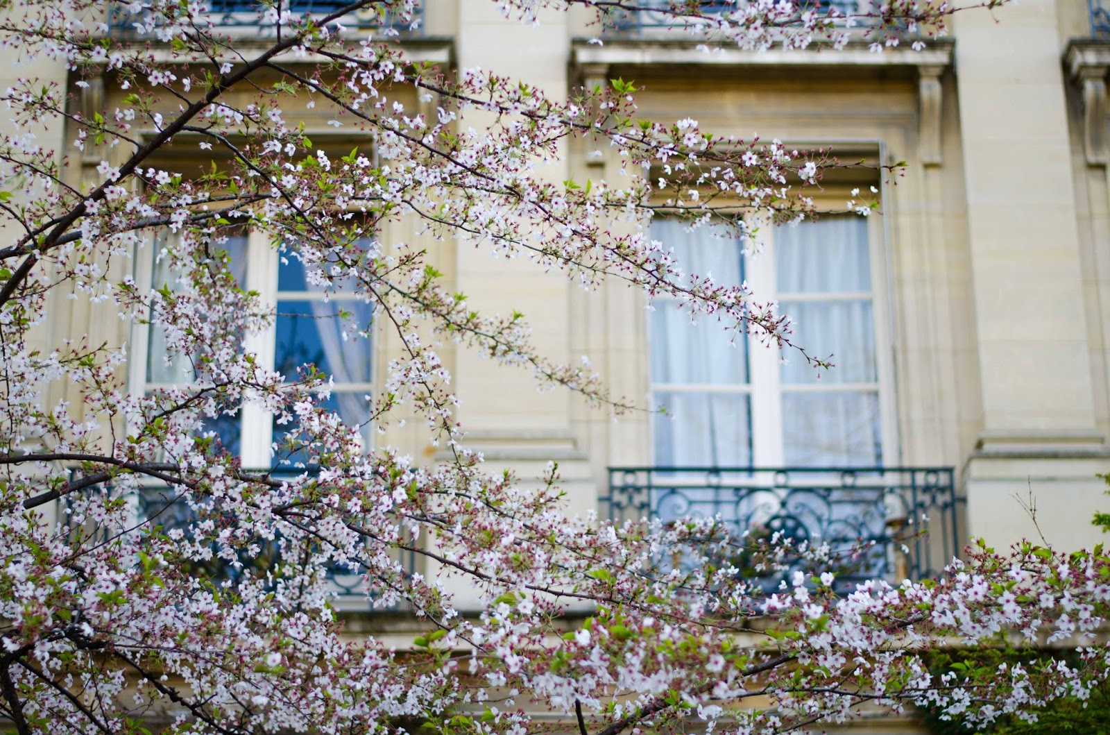 paris house with balcony blossoming trees