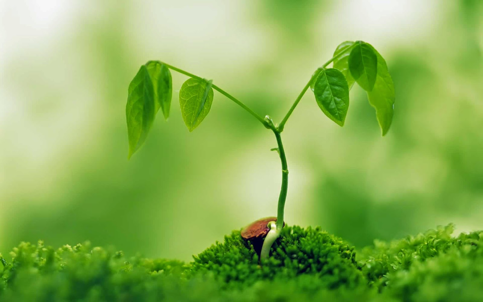 plant wallpapers nature tree plants desktop natural growing computer planting flowers growth garden seed plantas non herbal natura grow leafs