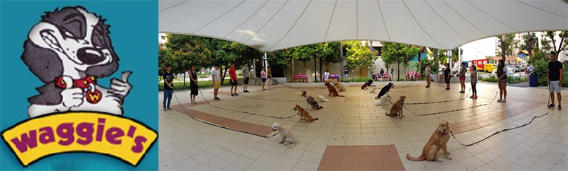 Dog behaviourist Singapore