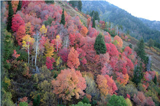 fall colors, Utah, Ogden, family history, genealogy