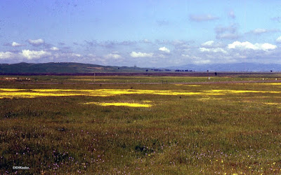 vernal pools, California