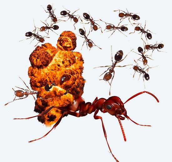 Formigas explodindo