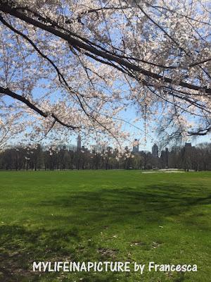 photo by francesca,New York, city, spring