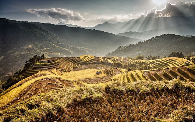 Unique terraces in Ha Giang 3
