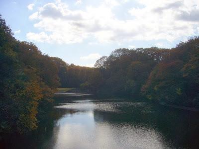 大阪府・府民の森〔緑の文化園〕むろいけ園地 室池の紅葉