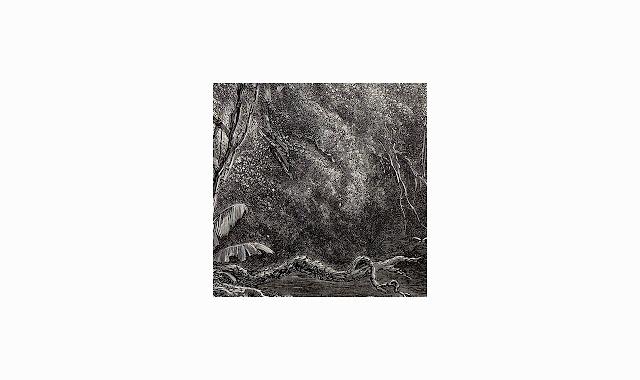 Anthurus d'Archer - Reimpression
