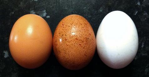 Terbongkar! Ternyata Begini Cara Dukun Memindah Penyakit ke Dalam Telur