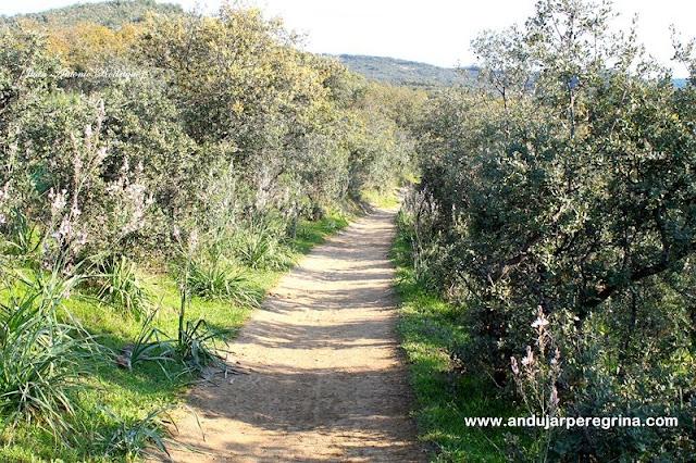 Camino viejo o de herradura