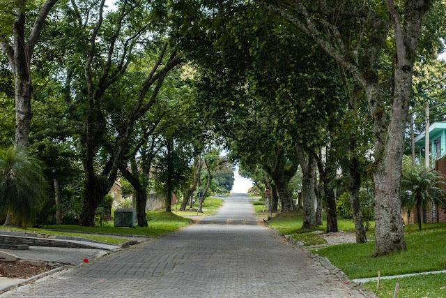 Trecho bem arborizado da Rua Manoel de Souza Dias Negrão