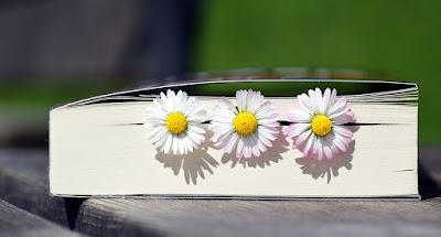 Book, Read, Literature, Book Pages, Paper, Spring, koleksi, buku, hobi, membaca, kegemaran, kesukaan, novel, komik, buku sejarah, novelis ahadiat akashah, novel hikayat cinderella, komik doraemon, komik anak - anak sidek,