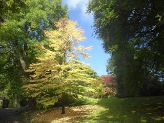 Autumn sunlight in Clyne Gardens