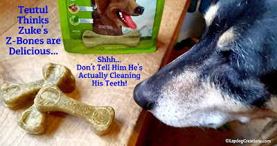 Shhh.. Teutul Thinks Zuke's Z-Bones are Delicious and has no idea they're helping to keep his teeth clean!  #ChewyInfluencer #NationalPetOralHealthCareMonth #DentalTreats ©LapdogCreations