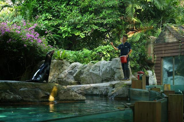 focas_zoo_singapur