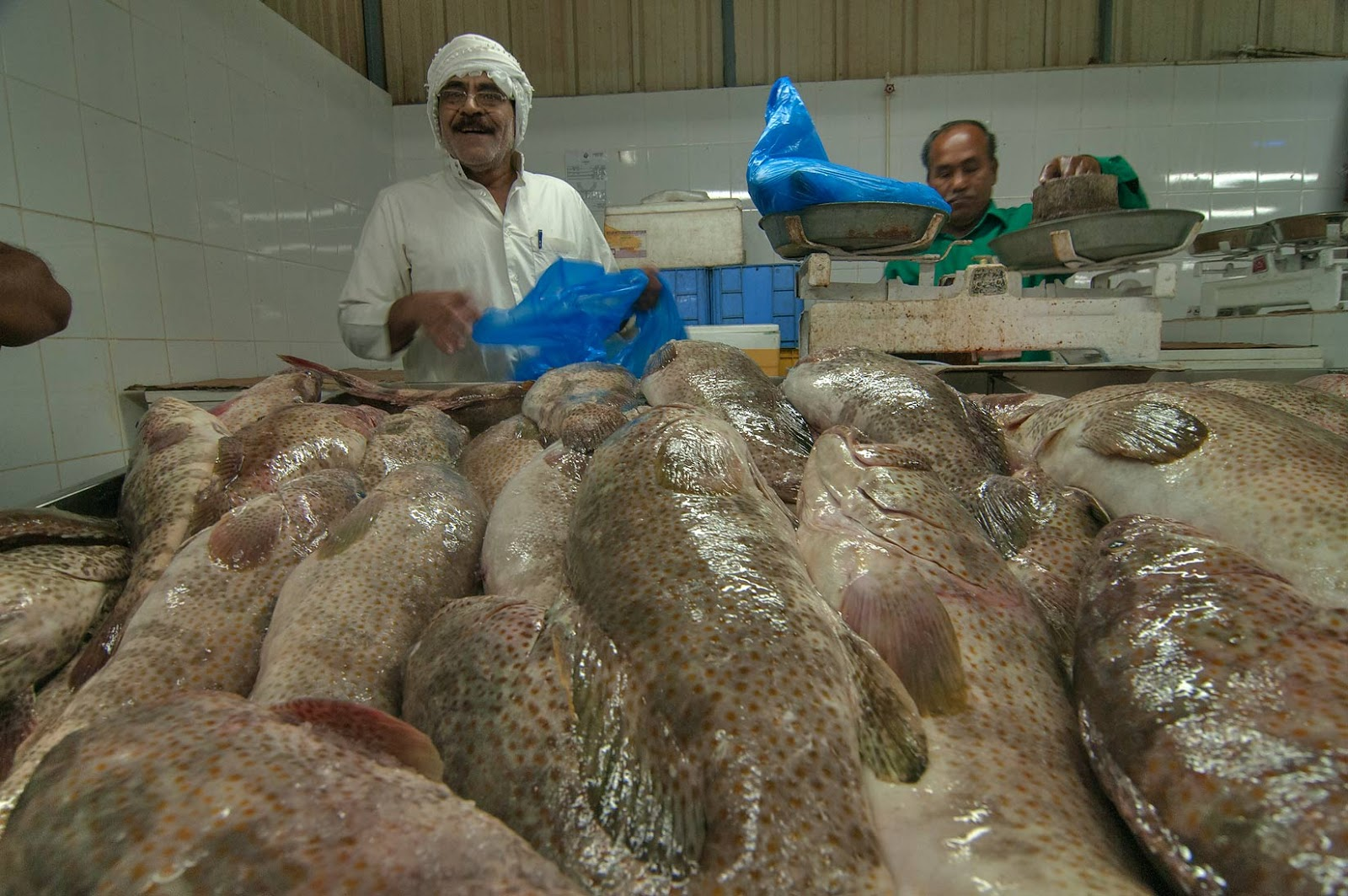 Wholesale Grouper Fish - Soft Shell Crab Supplier, Soft Shell Crab